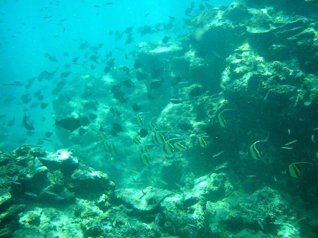 奄美大島 海の中