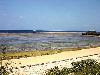 中野ビーチ