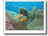 ケラマ諸島、海の中