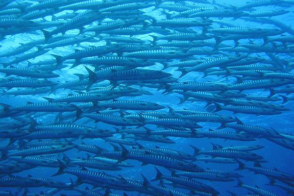 大物・魚群が狙える人気NO.1ブルーコーナー
